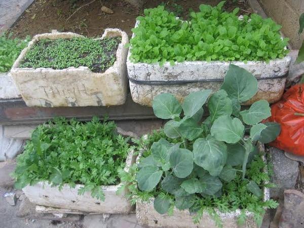 Người tiêu dùng ngộ nhận rau tự trồng là rau an toàn