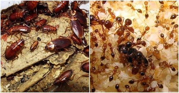 Chỉ cần một quả chanh cả đời bạn sẽ không cần phải lo muỗi, kiến, gián