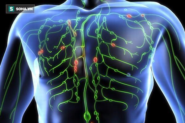 Tiến sĩ Mỹ hướng dẫn 5 bước làm sạch hệ bạch huyết, ngừa mọi bệnh tật
